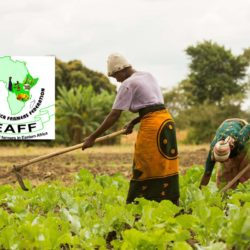 Eastern Africa Farmers Federation: Promoting agri-business for farmers in East Africa